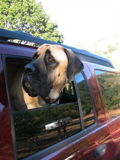 Jack, head out of car.jpg