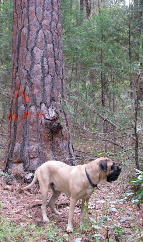 Jack&Tree.jpg