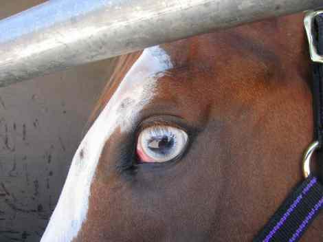 Blue-eyedHorse.jpg