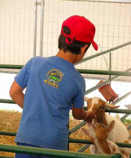 Boy&Goats.jpg