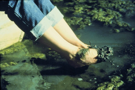 Algae,feet in water.jpg