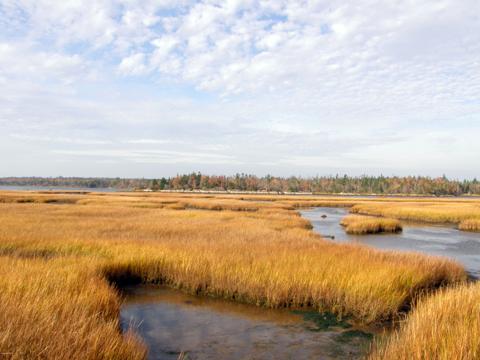 Salt Marsh.jpg