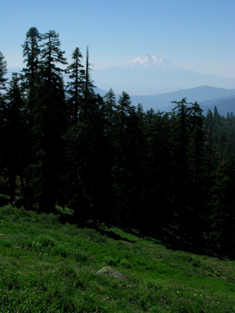 View of Mt. Shasta from Mt. Ashland, July.jpg