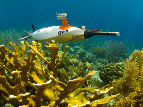 Elkhorn coral & research robot.jpg