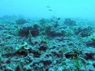 Flattened coral reef, degraded by loss of branching coral).jpg