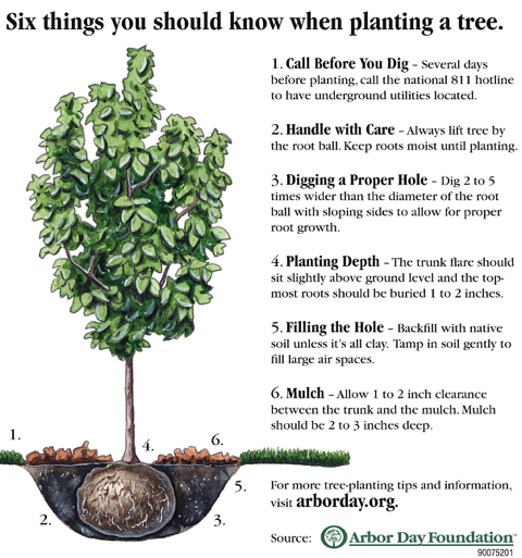 6 things you should know when planting a tree, from Arbor Day Foundation